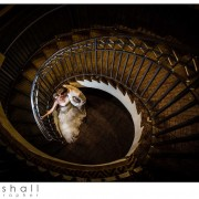 Saint Louis Wedding photographer Silverstein